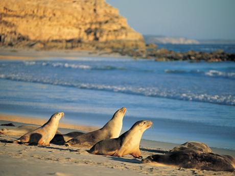 Photo of Kangaroo Island Seal Bay