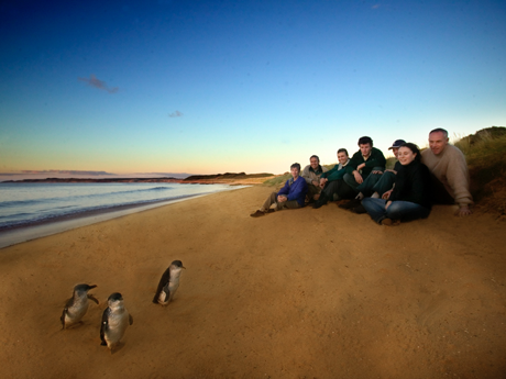 Photo of penguins at Phillip Island