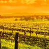 Photo of Barossa vineyard