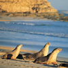 Photo of seals on Kangaroo Island